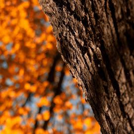 Tree of life by Dragan Dvorski - Novices Only Macro ( orange, macro, nature, tree, colorful, yellow, springtime, spring, sun )