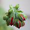 outdoor photography red flower buds bloom gerranium_130429_5648.jpg