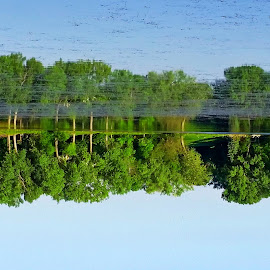 Upside Reflection by Riley Poeschl - Novices Only Landscapes ( reflection, green, trees, forest, upside down )