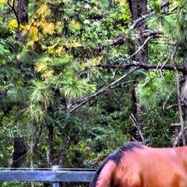 by Gina Lynne - Animals Horses