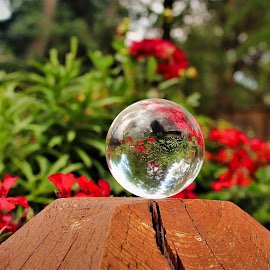 Garden scene using Glass Ball by Bruce Newman - Artistic Objects Glass ( glass, reflection, depth of field, artistic object, colorful,  )