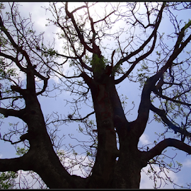 Sky is so high by Milan Kumar Das - Nature Up Close Trees & Bushes