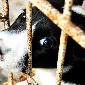 Adopt me... by Adrienn Liker - Animals - Dogs Portraits ( look, shelter, cage, puppy, dog, eyes )