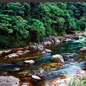 Forest and river by Cristobal Garciaferro Rubio - Landscapes Forests ( water, rover, fores, trees, leaves, rocks )