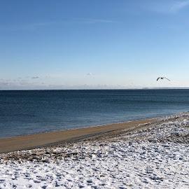 Gull Flies over Snowy Beach by Kristine Nicholas - Novices Only Landscapes ( clouds, water, sand, waterscape, snowy, sea, seagulls, water birds, ocean, beach, atlantic, landscape, birds, salisbury, bird, flying, gull, winter, seagull, snow )