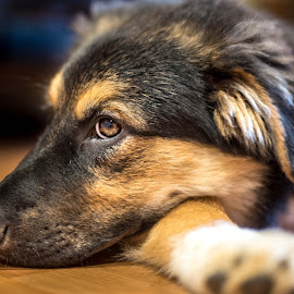 Side profile by Darren Sutherland - Animals - Dogs Portraits
