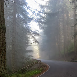by Keith Sutherland - Nature Up Close Trees & Bushes ( hill, fog, forest, road, rural )