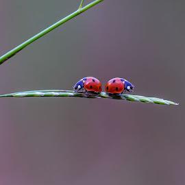 by Henk Van Straten - Animals Other Mammals