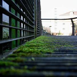 Little Bridge by Julian McErnest - Buildings & Architecture Bridges & Suspended Structures ( bridge, landscape, portrait, city )