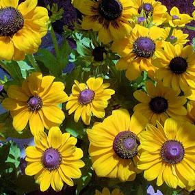 Spring has Sprung by Cheryl Thomas - Flowers Flower Gardens ( yellow, flowers, garden, spring, yellow flower,  )