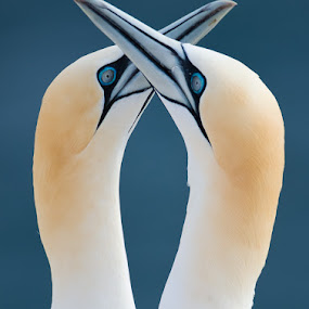by Gorazd Golob - Animals Birds