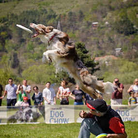 The rocket by Claudiu Guraliuc - Animals - Dogs Playing