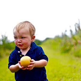 golden boy by Colin F - Babies & Children Child Portraits ( picking, apple, pick, boy, golden )
