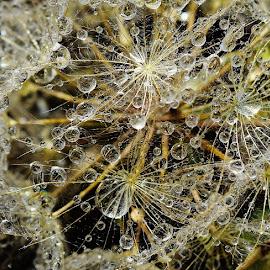 by Denton Thaves - Nature Up Close Natural Waterdrops