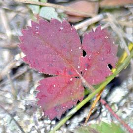 Leaf by Jaliya Rasaputra - Nature Up Close Leaves & Grasses