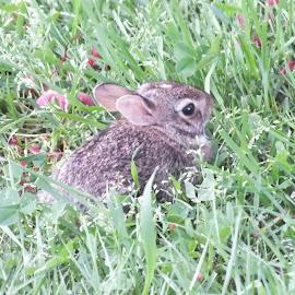 Baby Rabbit by Richard Steinmetz - Animals Other