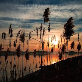 Sunset in Prosika by Branko Meic-Sidic - Landscapes Sunsets & Sunrises ( prosika, peaceful, hdr, sunset, dramatic, croatia, sea, beach, colours, pirovac )