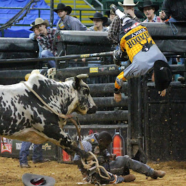 I Believe I Can Fly by Brian  Shoemaker  - Sports & Fitness Rodeo/Bull Riding ( flying, bulfighter, cowboy, bullrider, rodeo, bull, lifesaver )
