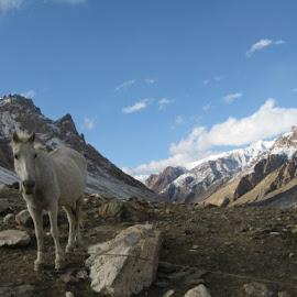 Near Gumbaranjan by James Bridge - Animals Horses