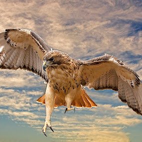 by Mark Cavanah - Animals Birds