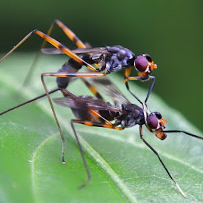 kimpoi by Enggar Rizky - Animals Insects & Spiders