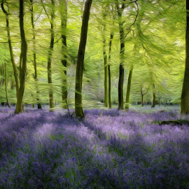 Bluebell Woodlands - Digital Art by Ceri Jones - Digital Art Places ( digital, spring, woodlands, forest, art, woods, season, trees )