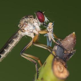 by Zaidi Razak - Animals Insects & Spiders