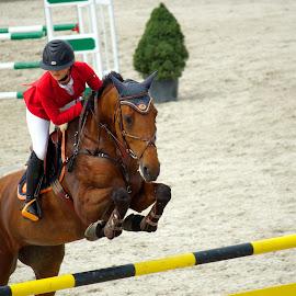 The obstacle by Dana Dana - Sports & Fitness Rodeo/Bull Riding ( horses )