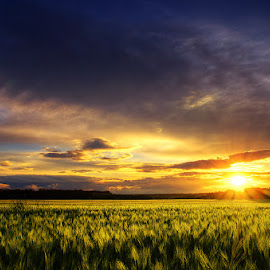 20160603-DSC_4908 by Zsolt Zsigmond - Landscapes Prairies, Meadows & Fields ( wheat, clouds, field, sunset, sunrays, landscape, sun )