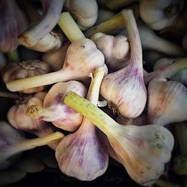 Garlic galore  by Marianne Ang - Food & Drink Ingredients