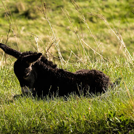 Baby Burrow by Lacey Trigg - Animals Other ( custer state park, burrow, nature, south dakota, baby )