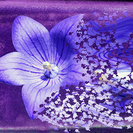 purple flower by LADOCKi Elvira - Digital Art Things