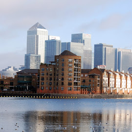 Canary Wharf and Greenland Dock by Sara Rackow - City,  Street & Park  Skylines ( water, development, thames, london, southwark, canary wharf, rotherhithe, greenland dock, finance, birds, attraction, river, banks, city,  )