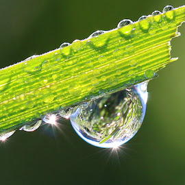 by РАЙНА СИНДЖИРЛИЕВА - Nature Up Close Natural Waterdrops