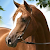 Horse Jump Run Simulator:Show file APK Free for PC, smart TV Download