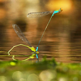 Try to Fly by Partha Chakraborty - Animals Insects & Spiders
