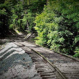 Into The Woods by Brant Stevenson - Transportation Railway Tracks