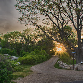 Lighthouse Lane in Rockport Mass by Paul Gibson - City,  Street & Park  Neighborhoods ( tree, house, road, sunlight, light )