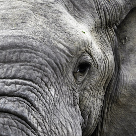 by Melody Pieterse - Animals Other