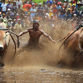 Dancing Again by Achmad Tibyani - Sports & Fitness Rodeo/Bull Riding ( bull race, batusangkar, pacujawi, indonesia, traditional sport )