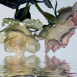 two roses by LADOCKi Elvira - Digital Art Things ( flowers )