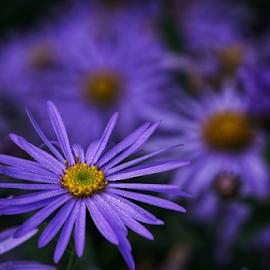 Dew  by Todd Reynolds - Flowers Flower Gardens