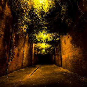 by Kam Mccallister - City,  Street & Park  Historic Districts ( oregon, urban, lowlight, kam mccallister, low key, vines, spooky, night, bricks, cityscape, city, alley, night lighting street,  )