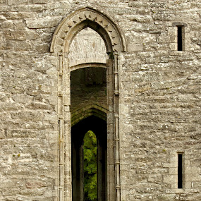 deep history by Michael Croghan - Buildings & Architecture Public & Historical ( leafs, vaulted, ruin, green, stone walls, trees, windows, historic, abbey )