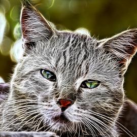 cat by Kallol Bhattacharjee - Digital Art Animals
