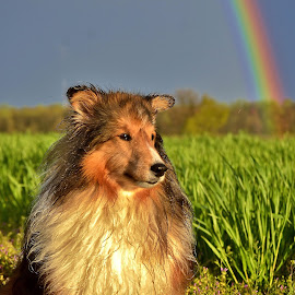 All Wet and Waiting for the Sun by Tim Hall - Animals - Dogs Portraits ( dog and rainbow )