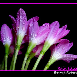 Rain lilies...  by Asif Bora - Typography Quotes & Sentences