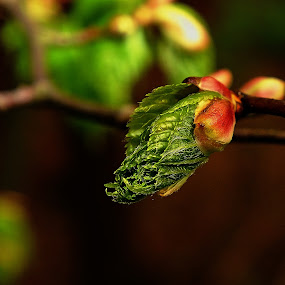 Spring at the forest by Vláďa Lipina - Nature Up Close Trees & Bushes