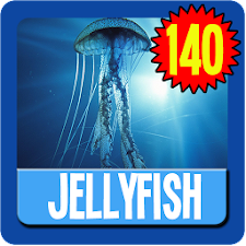 Jellyfish Wallpaper HD