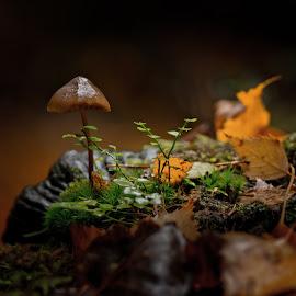 by Bojan Bilas - Nature Up Close Mushrooms & Fungi ( orange, beautiful, fine art, finland, forest, funghi, glow, woods, close-up, macro, nature, color, autumn, suomi, light, closeup, mushrooms )